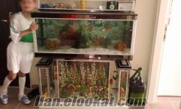 satılık akvaryum ve balıkları full