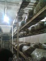 devren satılık mantar tesisi