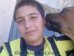 kırşehirde sahibinden satılık kankal köpeği