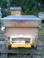 ARI trakya ırkı satılık arı