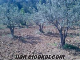 sahibinden satılık zeytin bahçesi 4000m²