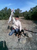 burdurdan satılık av köpekleri