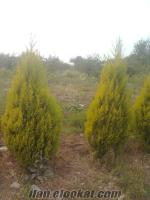 emiralemde satılık 4, 5 dönüm çekirdeksiz nar bahçesi