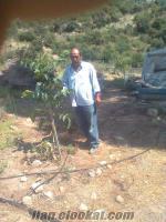 manisa kırkağaçta satılık 200 dönüm badem bahçesi..