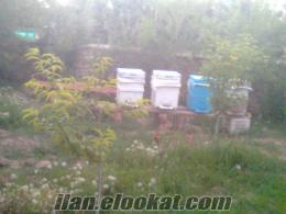 veli dağ satlık 3 kovan arı