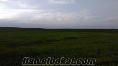 eskisehir sivrihisar aydınlı köyünde 600 dönüm satlık tarla sulu tarım