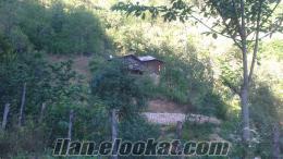 giresun yağlıdete güllüce köyü satılık köy evi