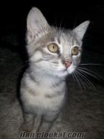 minik kedimiz Avcılarda