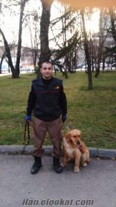 Köpek Eğitim ve Gezdirme