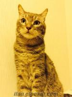 Van-Ankara melezi kedimizi sahiplendiriyoruz