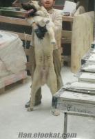 Safkan Kangal köpeği