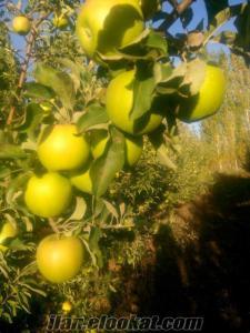 organik toptan elma