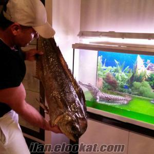 satılık kurutulmuş balık köpek balıgı yengeç vatoz vs...