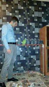 Jako ve tüm papağanlar mevcuttur fiyatlar piyasanın çok altındadır.tüm kuslarimi