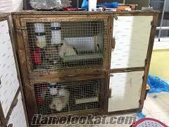 satılık tavşan üretim hane