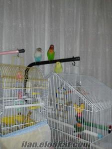 Takas cennet papağanı hint bülbülü