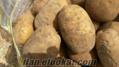 Afyon patatesi