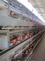 bursada satılık kutlusan bantlı tavuk kafesi