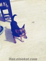 fino köpeğimize yeni bir aile arıyoruz