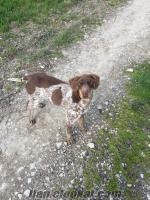 boluda kayıp av köpeği
