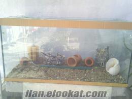 İzmir Gültepede satılık akvaryum