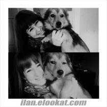 Ankara Abidinpaşada köpeğim Rıfkı çalındıı