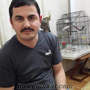 Sahibinden satılık sultan papağan