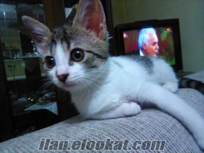 Kedi vermek istiyorum Ücretsiz