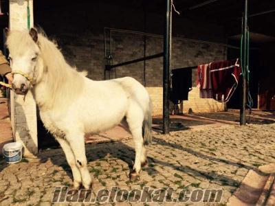 pony atı İstanbul