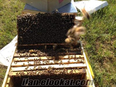 arı satışı ankara