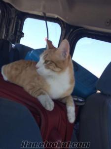 Mezitlide kedim kayıp!!!