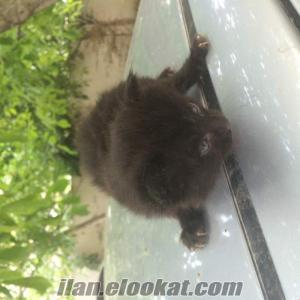 Bebek Kedilere yuva