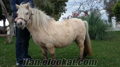 pony atı Kadıköyde