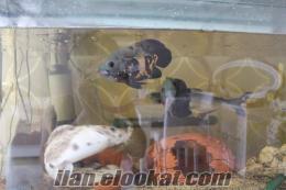 show akvaryum balıkları toplu satış