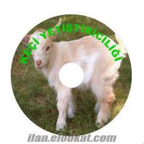 Koyun Keçi yetiştiriciliği filmleri 25 TL, Süt keçisi yetiştiriciliği, Saanen ke
