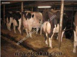 onur tarım ve hayvancılık