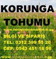 Korunga tohumu 2 TL, korunga tohumu fiyatı, korunga-tohumu-fiyatları, korunga fi