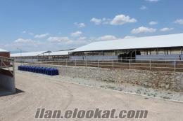 Çiftlik Acil Satılık