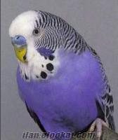 bakamadığınız kuşlarınızı ücretsiz sahiplendirin
