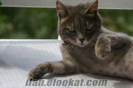 Kedi Kumu 5 TL, kedi kum, kedi kumları, kedi kumu fiyatları, zeolit, Klinoptilol