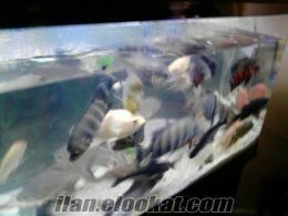 Şanlıurfdan sahibinden satılık balık ve sehpasıyla birlikde