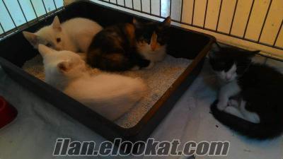 adanada veteriner kontrolün de kedi yavrusu verilecektir.