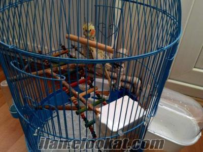 şirin sultan papağanı kafesi ve oyuncakları ile birlikte