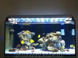 Maltepede deniz akvaryumu