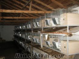 tavşan satlık kafes ve ekipmanları istanbul başakşehir