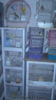 izmirde satılık kanarya 45 parça kafes ile beraber