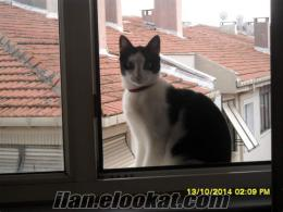 istanbul camlıcadan kedi