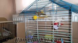 bursada satılık bülbüllü kanarya yavruları
