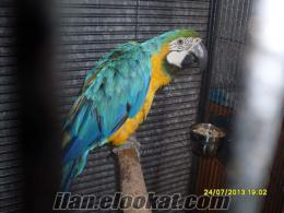 Ankaranın Kuş Ve Papağan Cenneti Açıldı... Jako - Kakadu- Ara ( macaw)