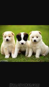 5 köpek büyüttüm köpeğinizi karşlıklı mutabakat sonucu gezdirebilirim